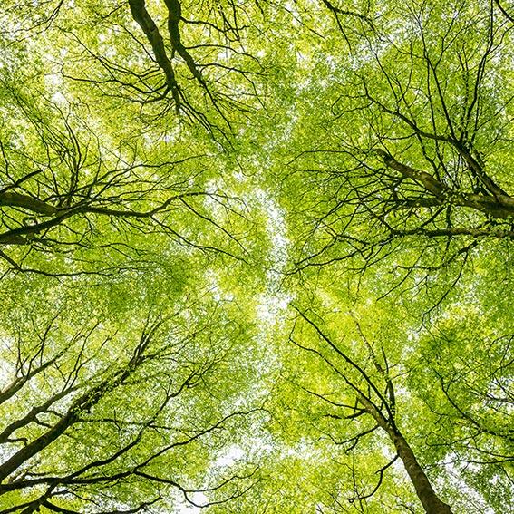 national woodland trust